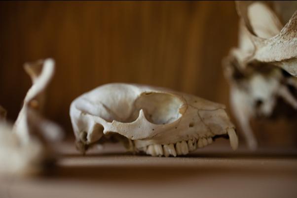 My Love For Skulls
